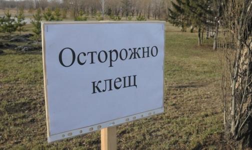 Фото №1 - В Петербурге больше 250 человек заразились «клещевыми» инфекциями