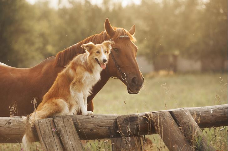 Фото №1 - Как собаки и лошади находят общий язык в игре