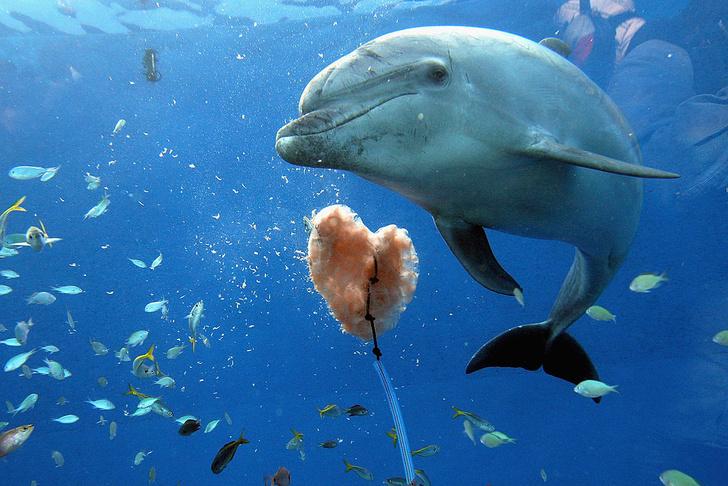 Фото №1 - Вторые после человека: 6 фактов о дельфинах