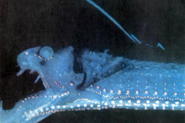 Фото №1 - Свет под водой