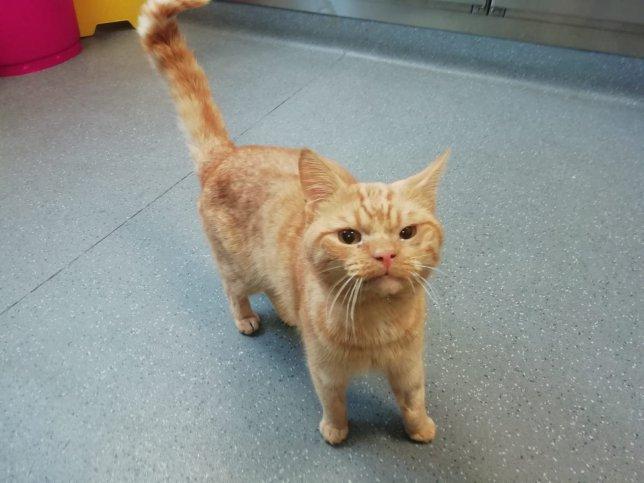 Фото №1 - Grumpy Cat 2.0: нашелся самый суровый кот в Интернете