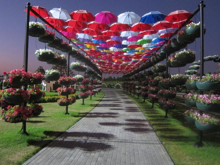 Фото №1 - Декабрь в ОАЭ: райский сад