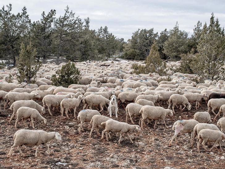 Фото №1 - Безлюдная пустыня