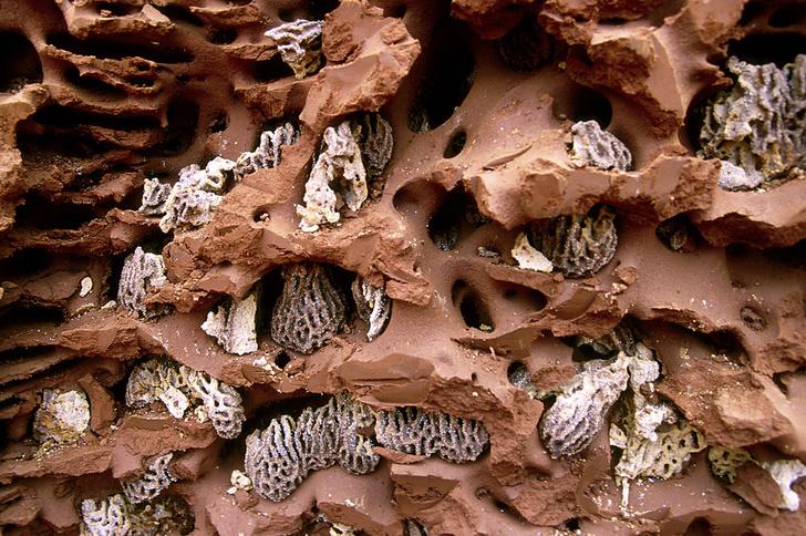 Фото №4 - Древние архитекторы: в чем термиты превзошли человека