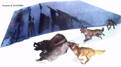 Фото №2 - Двойной полярный вариант