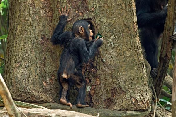 Фото №2 - 12 обезьян