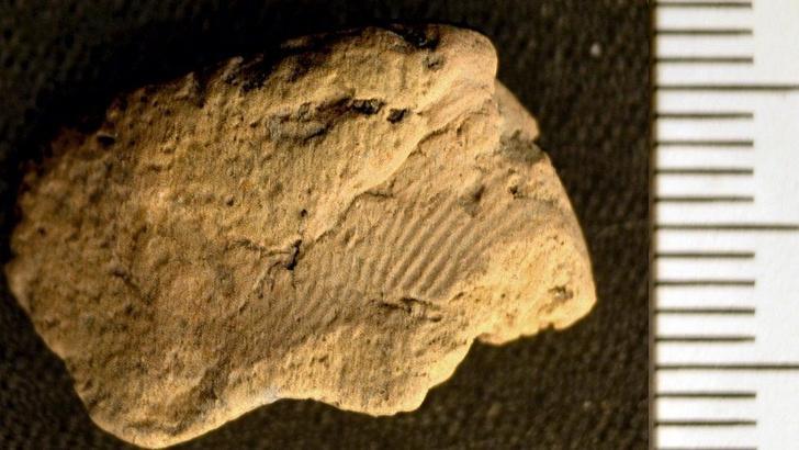 Фото №1 - Обнаружен отпечаток пальца возрастом 5 тысяч лет