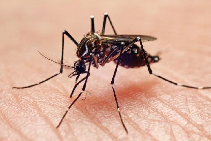 Как избавиться от зуда после укуса комара?