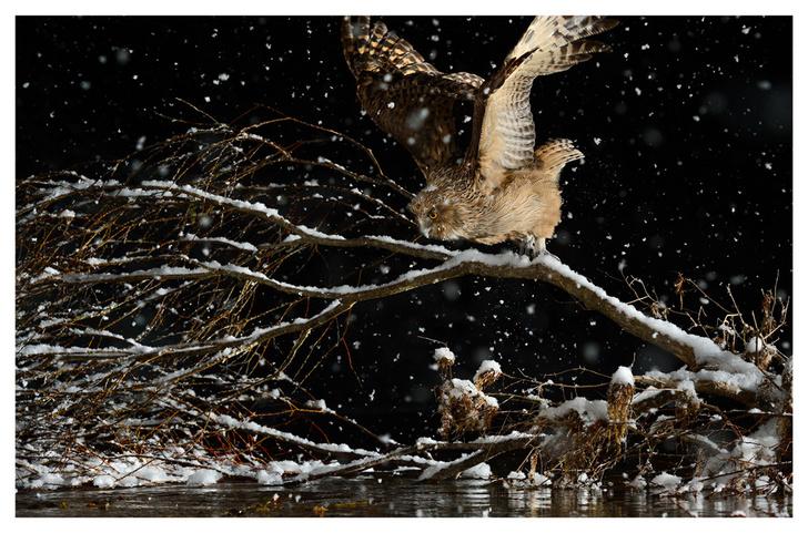 Фото №6 - Лесные истории