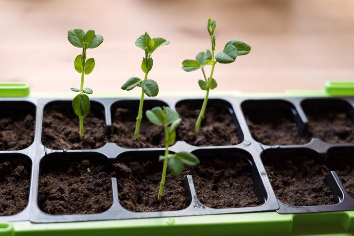 Фото №2 - 7 способов посеять семена на рассаду