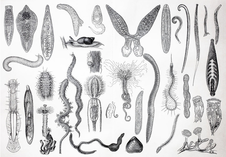 Фото №1 - Предки дождевых червей оказались виновны в глобальном потеплении
