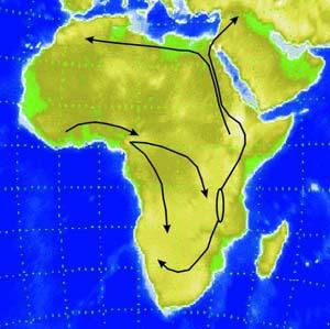 Фото №1 - Древняя засуха в Африке подтолкнула эволюцию
