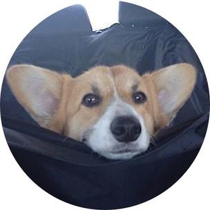 Фото №7 - Гадаем на гифках: какое смешное животное больше всего напоминает тебя сегодня