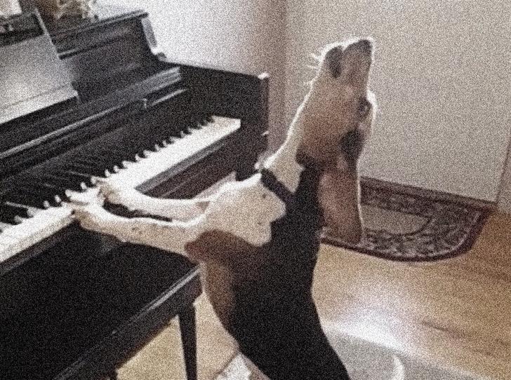 Фото №1 - История одной мелодии: Собачий вальс