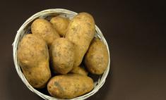 Описание сорта картофеля Ривьера и уход за ним