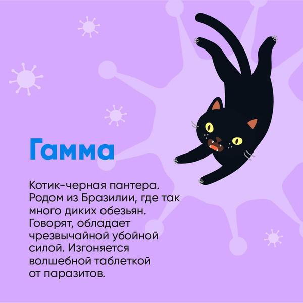 Фото №4 - Биолог Баранова сравнила штаммы коронавируса с милыми котиками: как они выглядят