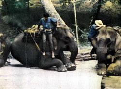 Фото №2 - Когда плачут слоны