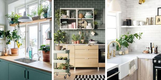 Фото №1 - Растения на кухне: 7 практичных идей