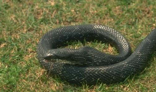 Фото №1 - Минздрав рассказал, как помочь пострадавшим от змей