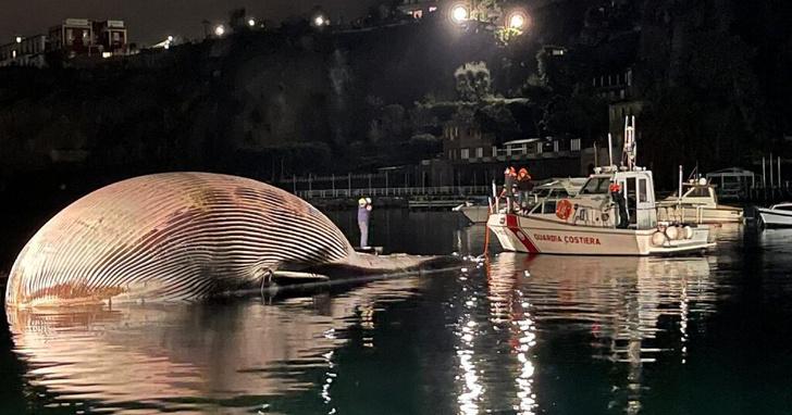 Фото №1 - В Средиземном море нашли тушу огромного кита