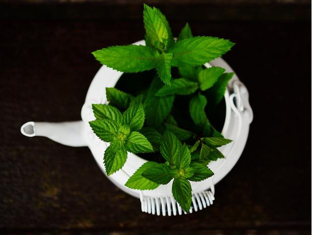 Фото №4 - 9 растений, запаха которых боятся комары