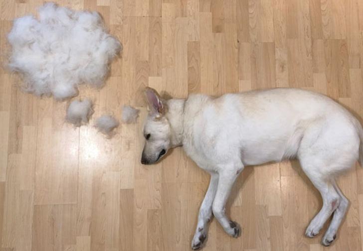 Фото №9 - Девушка создает забавные образы для своей собаки из ее собственной шерсти (много фото)