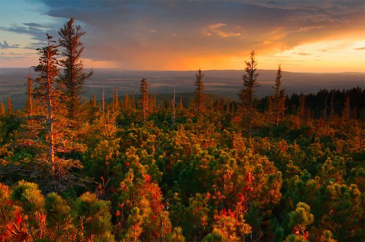 Фото №10 - Фотогалерея: лесные истории
