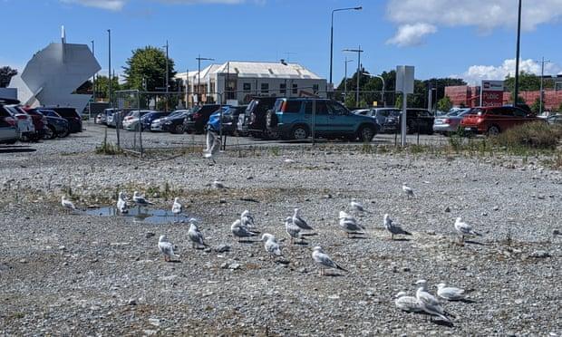 Фото №1 - Редкий вид птиц помешал строительству католического собора