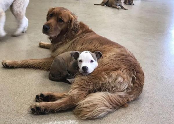 Фото №1 - Щенок Эдна находит самых пушистых и теплых собак, чтобы на них прикорнуть (15 уютных фотографий)