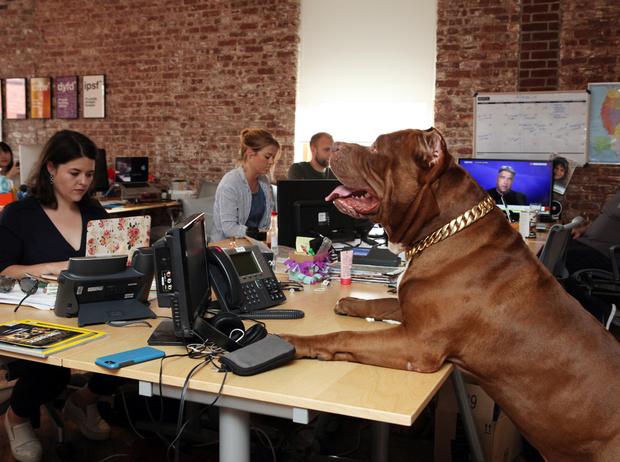 Фото №4 - Эффект золотой клетки: почему вашим сотрудникам на самом деле не нужен крутой офис