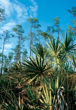 Фото №4 - Жаркие топи Флориды