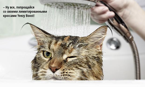 Фото №4 - Код кота: 31 ответ на вопросы котовладельца