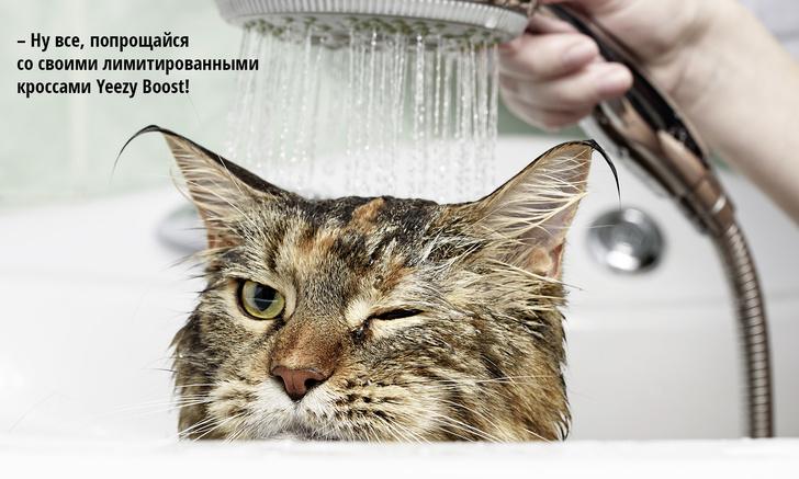 Фото №3 - Код кота: 31 ответ на вопросы котовладельца