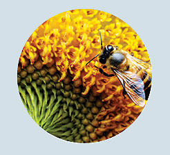 Фото №10 - Взятки сладки: 15 необычных видов меда