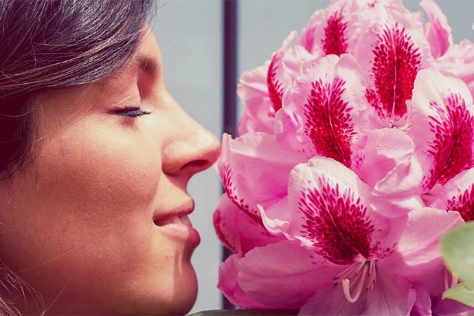 Запах — память наших эмоций