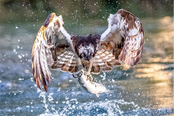 Фото №1 - Успешная охота