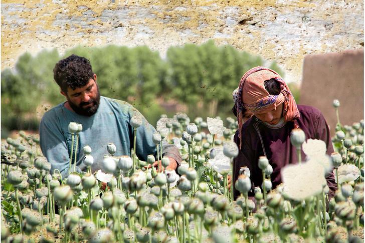 Фото №9 - Что не так с попытками наладить мир в Афганистане и страной в целом
