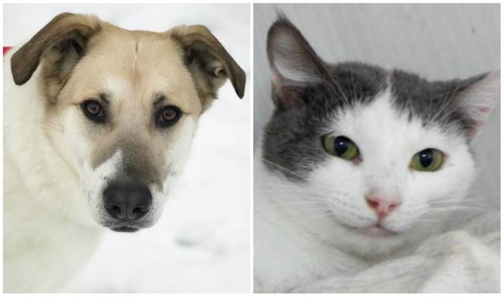 Фото №1 - Котопёс недели: собака Герда и кошка Джоконда