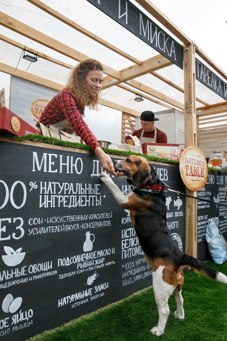 Фото №1 - В Москве открылось pet café «Тарелка и Миска»