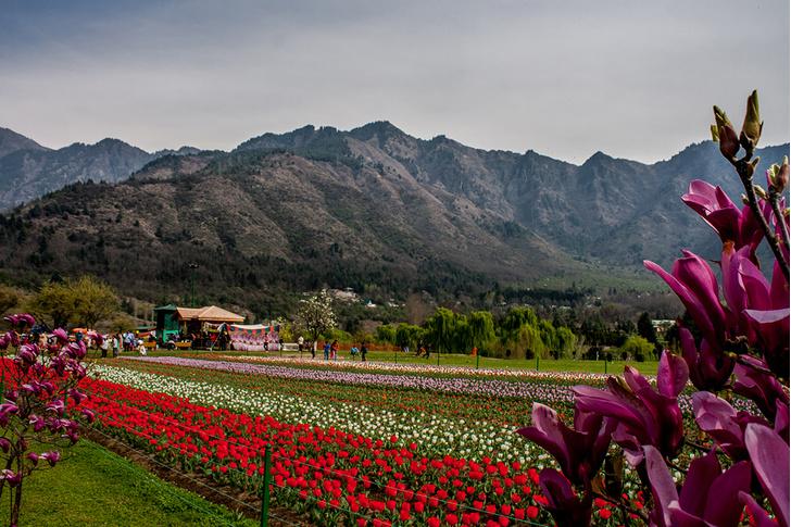 Фото №1 - Индийская весна