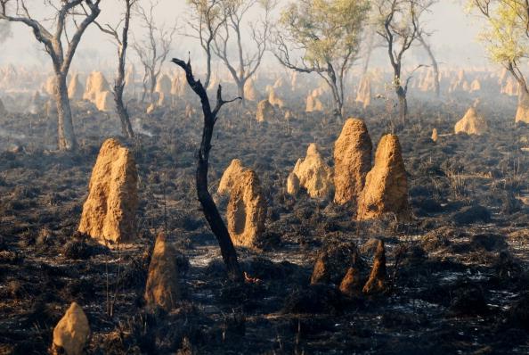 Фото №5 - Термитовый апокалипсис, восстание саранчи и еще 3 жутких нашествия насекомых