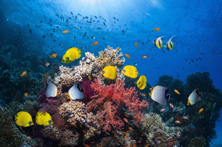 Фото №3 - Спасаем рыбок: самый милый и модный эко-тренд в косметике 🐟