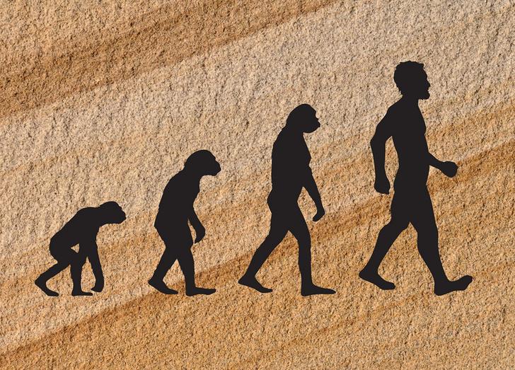 Фото №1 - Человеческое тело эволюционировало не менее четырех раз