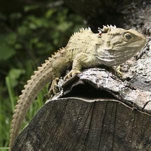 Фото №1 - Гнездо ровесницы динозавров