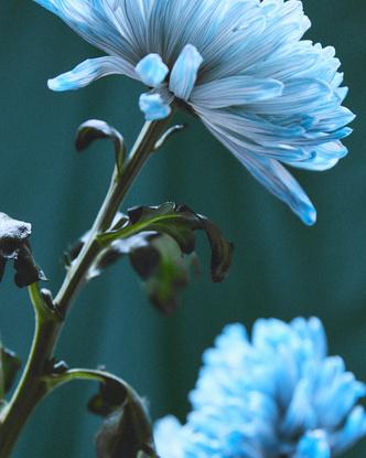 Фото №3 - Зеленый— новый черный: Claudie Peirlot представили экологичную коллекцию