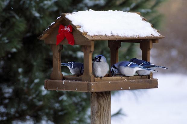 чем кормить птиц зимой в кормушке