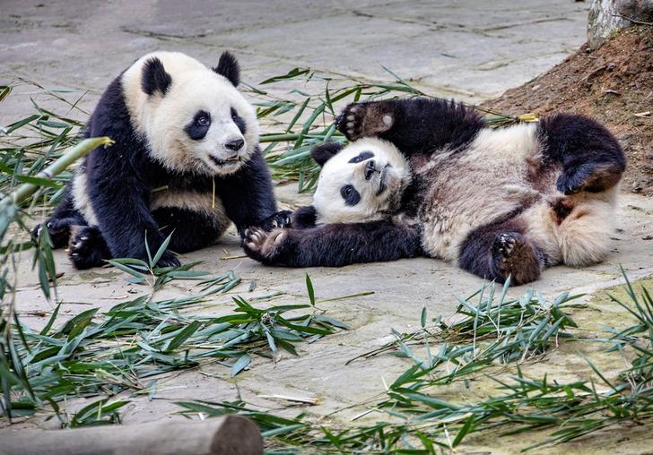 Фото №1 - Дело бамбук