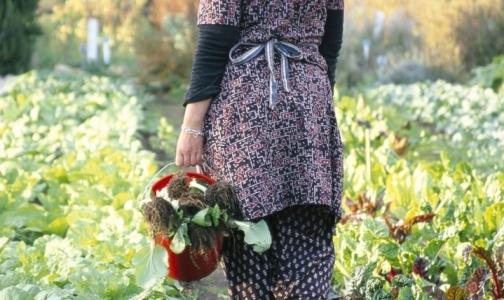 Фото №1 - В 30 садоводствах Ленинградской области открываются медпункты для дачников