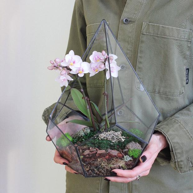 Фото №8 - Весенний флорариум с орхидеей: советы по изготовлению и уходу