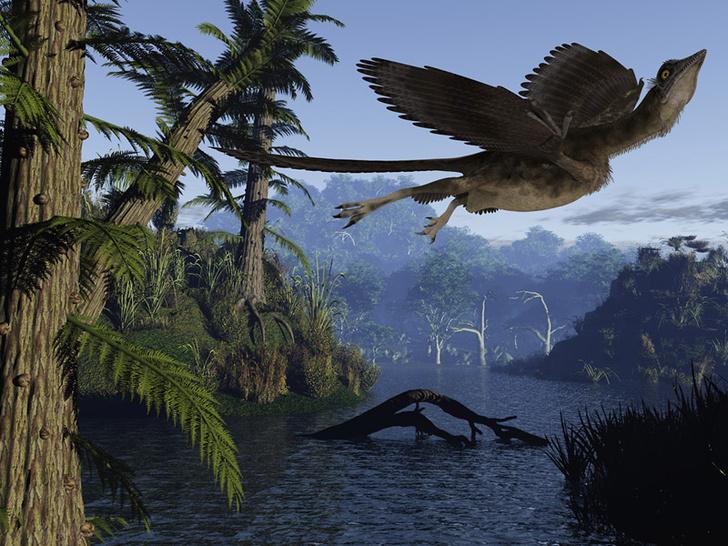 Фото №1 - Археоптерикс разучился летать